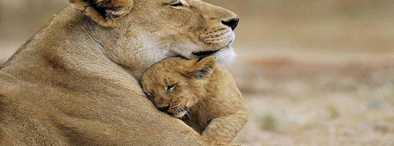 La maison majestueuse des Lions: Parc national de Gir